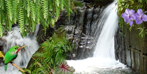 """Elyunque National Park"""